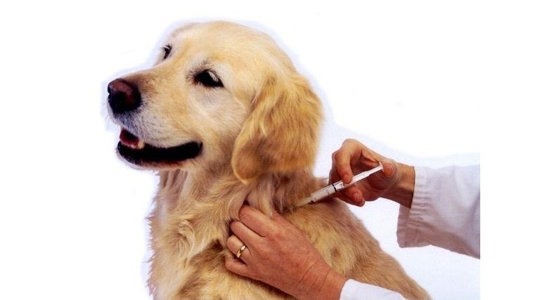 Vaccinarea este importanta!
