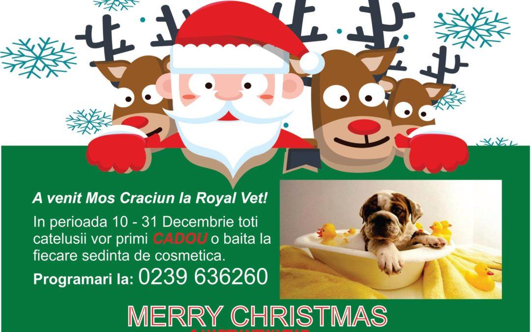 Spalatul animalutului este cadou la Royal Vet